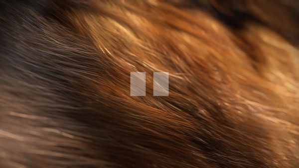 Realistic Animal Fur in After Effects from Iain Chudleigh
